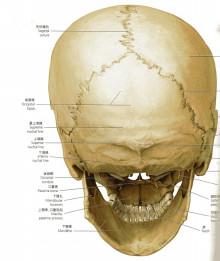 プロメテウス解剖学コアアトラス(医学書院)より