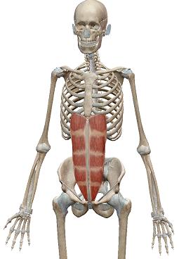 緊張した時起こる不具合ー腹筋を締めてると息は入る?呼吸エクササイズ動画